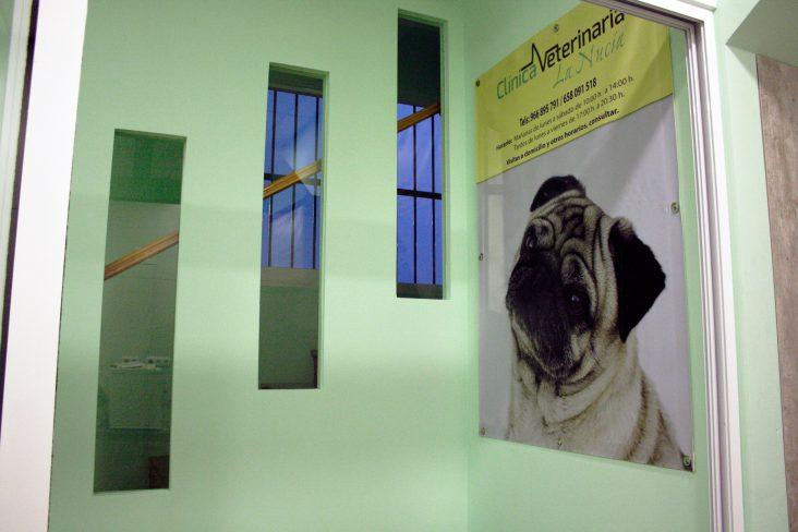 clinica de animales alfaz del pi