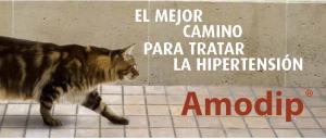 amodip hipertension felina