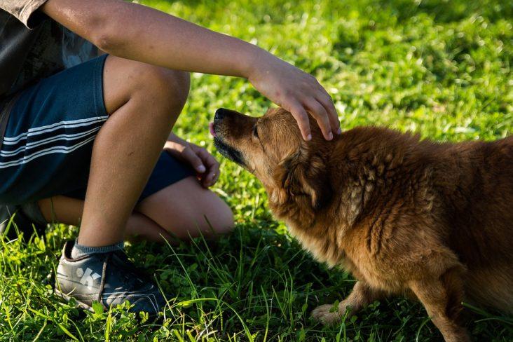caricia-perro